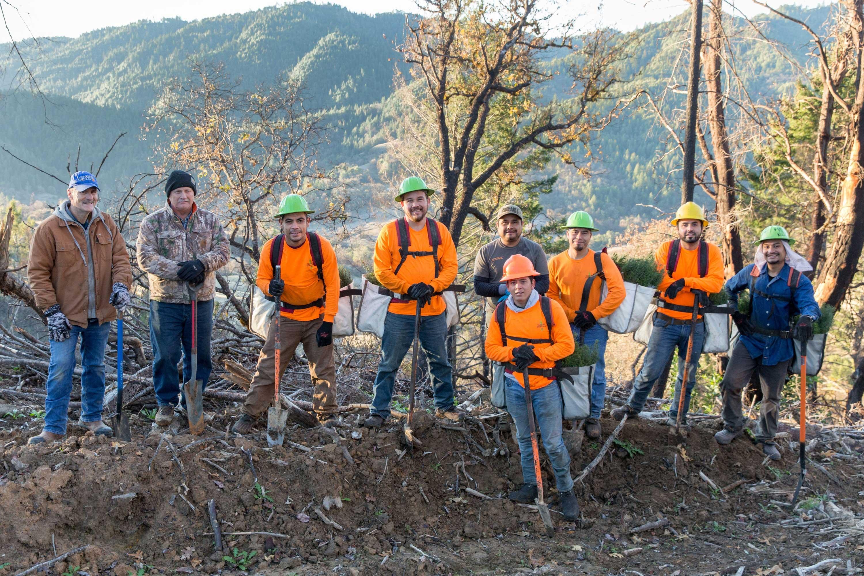 Tree planting efforts